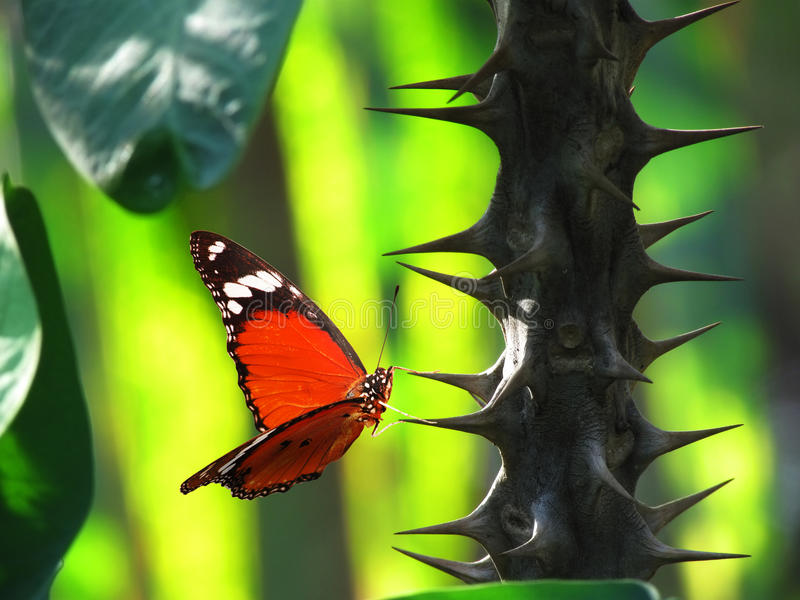 Red butterfly on thorn cactus stock images