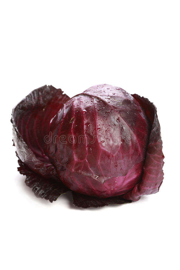 Free Red Cabbage Stock Image - 17683421
