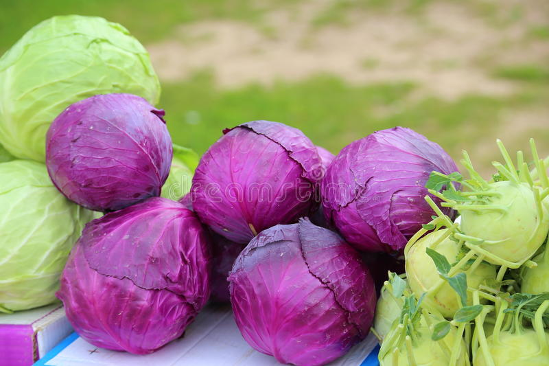 Red Cabbage Stock Image Of Diet Didelis Exclusif