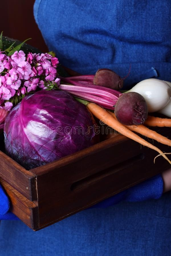 Red cabbage, little carrot, beetroot and onion in a wooden box stock image
