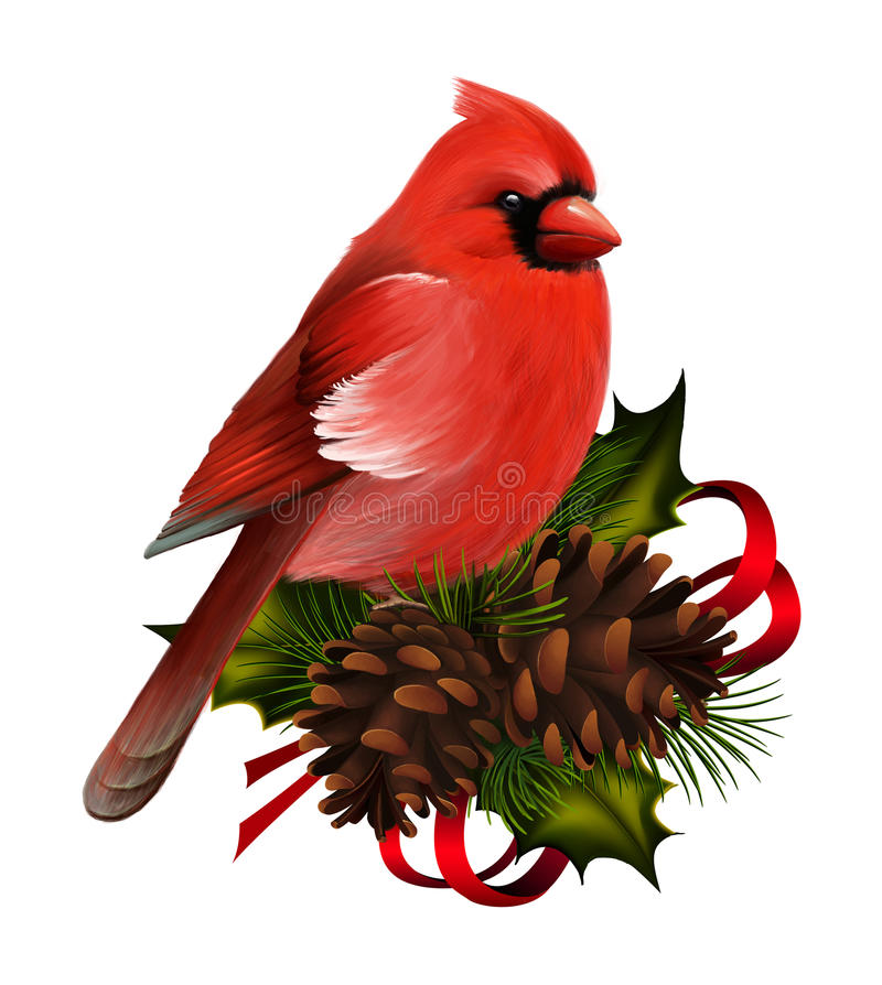 Red cardinal vector illustration