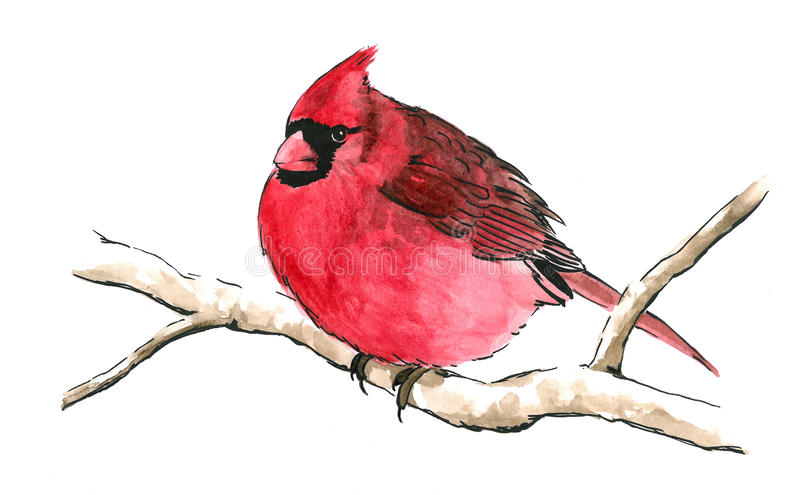 Red cardinal bird on tree branch. Bright red cardinal bird perched on branch isolated white background for clip art, cute red songbird with black mask eyes and royalty free illustration