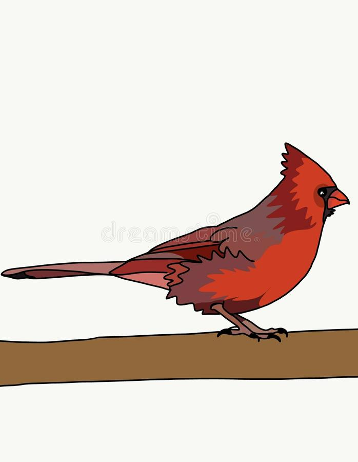 Red cardinal bird. vector illustration