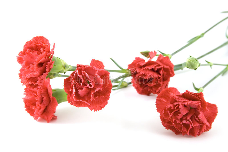 Red carnations bouquet stock photos