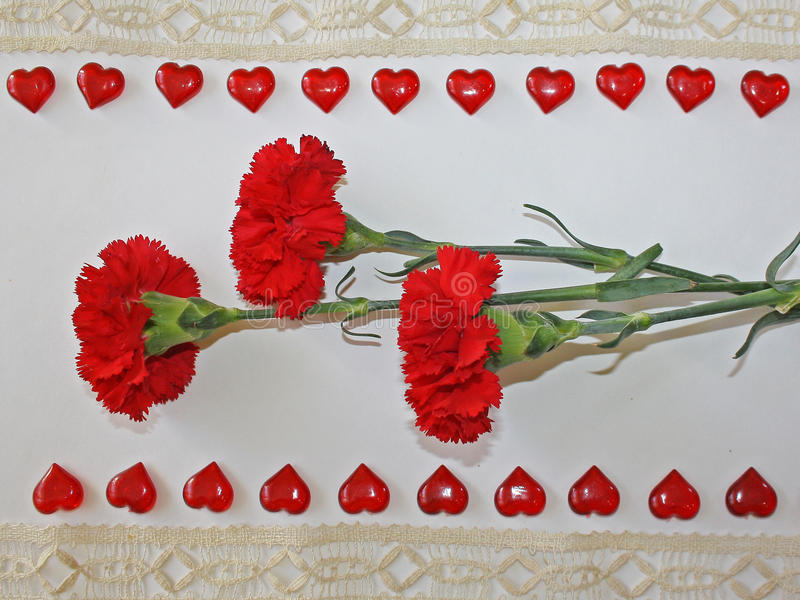 Red carnations on a white background stock photos