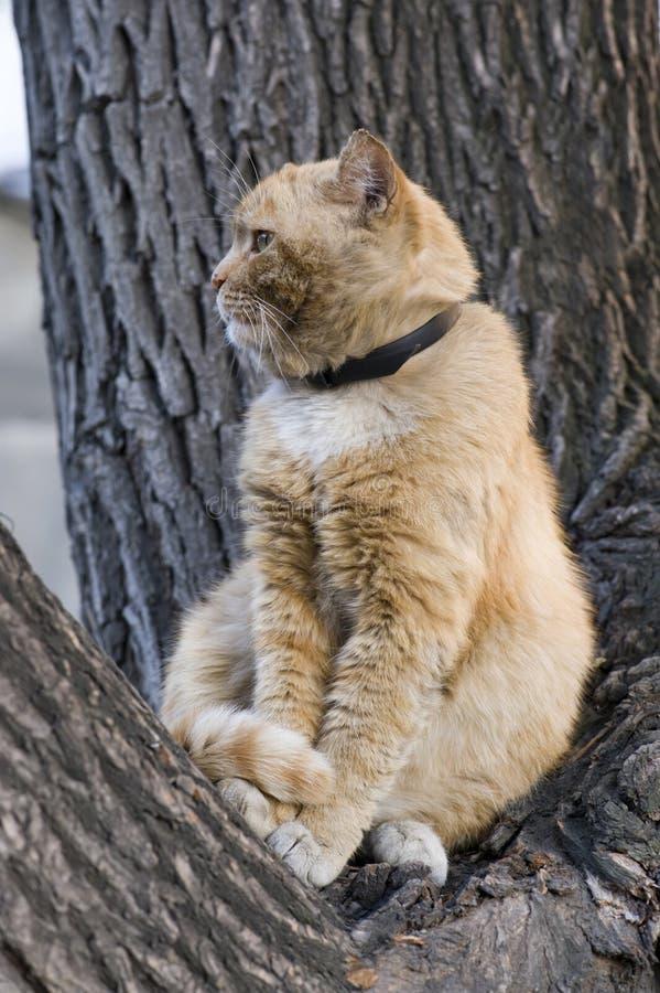 Download Red cat stock photo. Image of hunter, comfortable, feline - 18353304