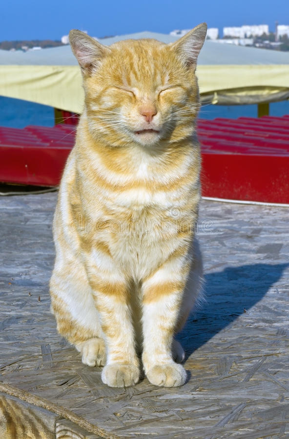 Download Red cat stock image. Image of tabby, beauty, pets, animals - 29134413