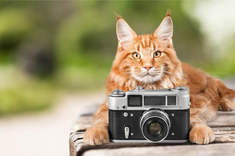 Download Adorable Red Cat  With Camera On Light Background Stock Photo - Image of expression, looking: 109018058
