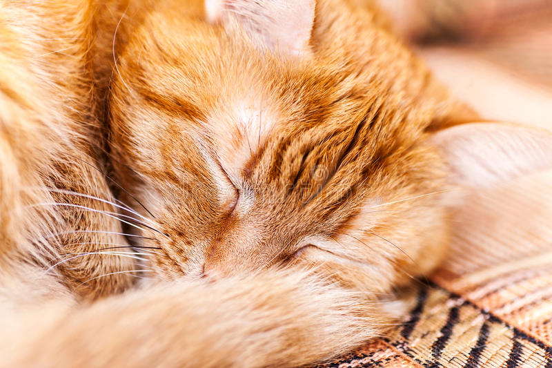 Red cat asleep stock photos