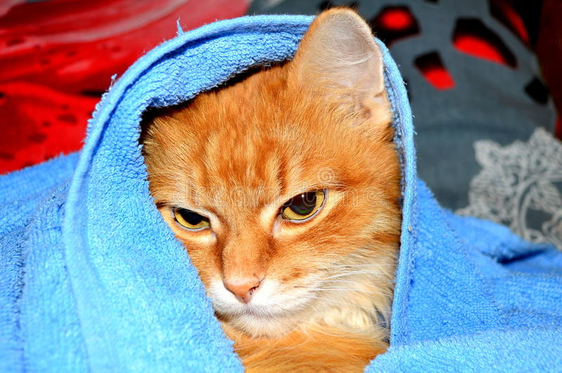 Red cat. S from ancient times was considered to be the backbone for all the sick and suffering people. Cats of this color has always been considered the royalty free stock image