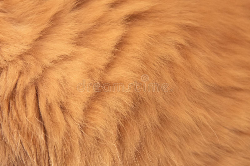 Red Cat Fur. Background Close-up royalty free stock image