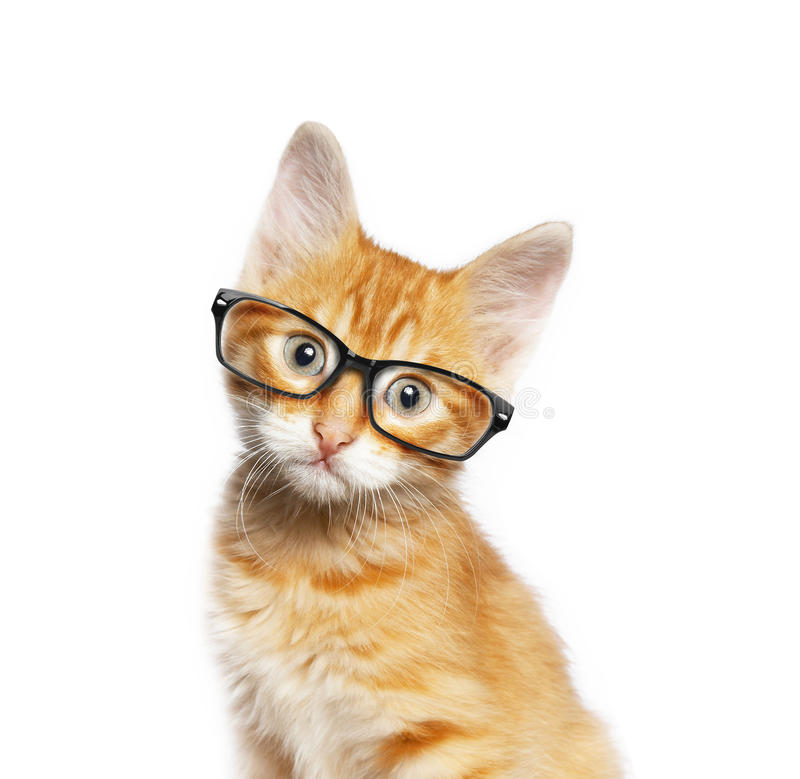 Download Red cat in glasses stock photo. Image of optometry, mammal - 67470196