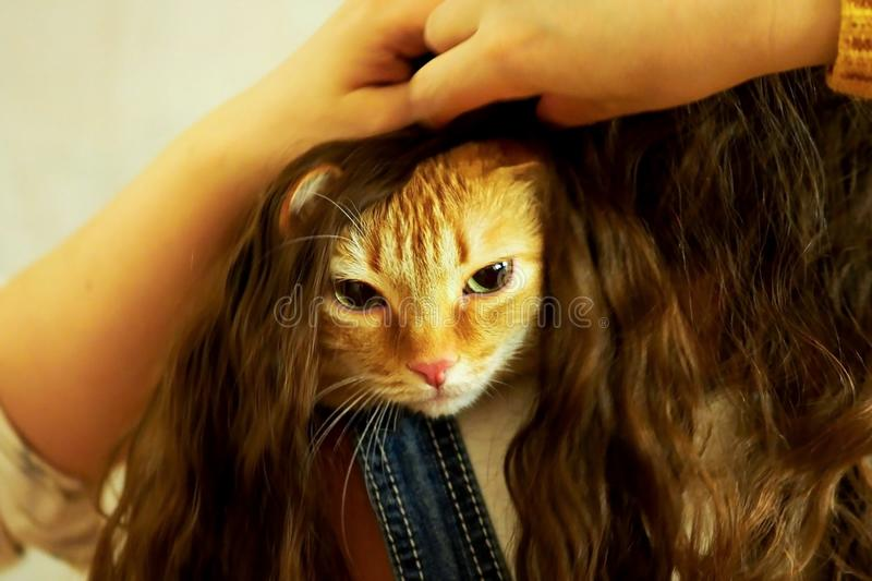 Red cat hid in the girl`s hair stock photos