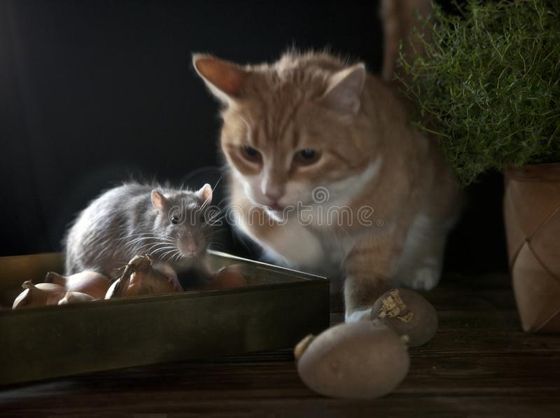 Red cat hunts a cute little gray mouse that sits in a box with onions. Still life composition in vintage style. Chinese New Year. Symbol stock photography