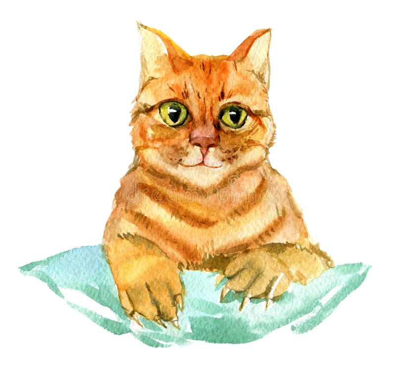 Red cat isolated watercolor illustration vector illustration