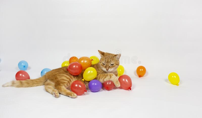 Red cat is looking at the camera. Pictures of cats, cat eyes, cute cat, drawings of cats, drawings of cats. Russian cat with a hat. On a white background. Balls royalty free stock photos
