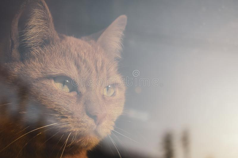 Red cat looking through the window. Serious piercing look. The cat is looking to the future royalty free stock photos
