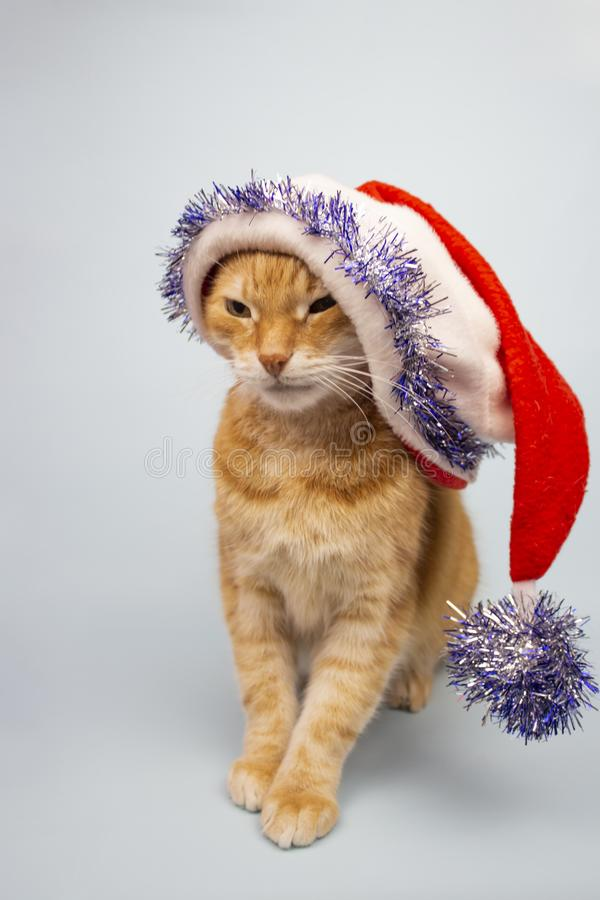 Red cat looks into the camera. Pictures of cats, cat eyes, cute cat, cat drawings, cat drawings. Cat Santa. Place for text. Red cat looks into the camera. Red stock photography
