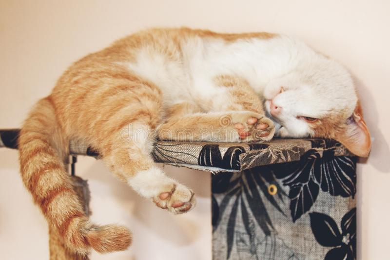 Red cat lying on the bed up paws. sleeping pet stock photography