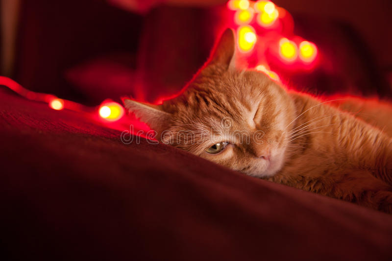 Red cat is lying on the sofa royalty free stock image