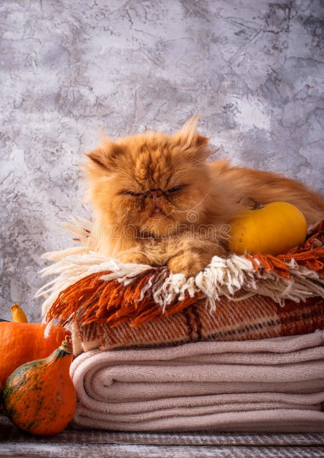 Red cat lying on a stack of plaids stock image