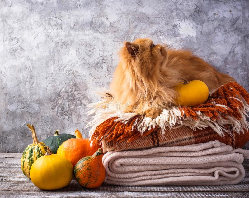 Red cat lying on a stack of plaids royalty free stock photo