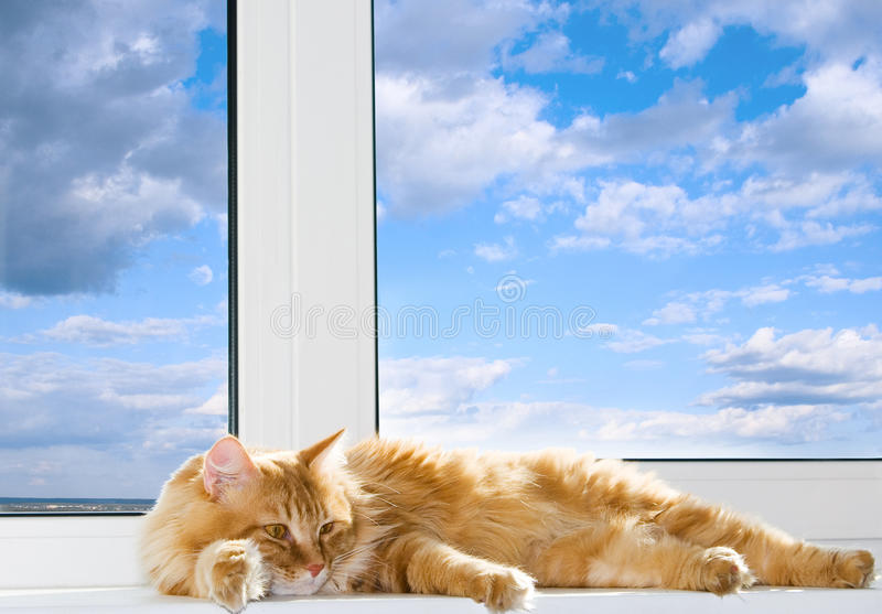 Red cat lying on the window sill. Red cat lying on the white window sill on the background of blue sky with clouds royalty free stock images