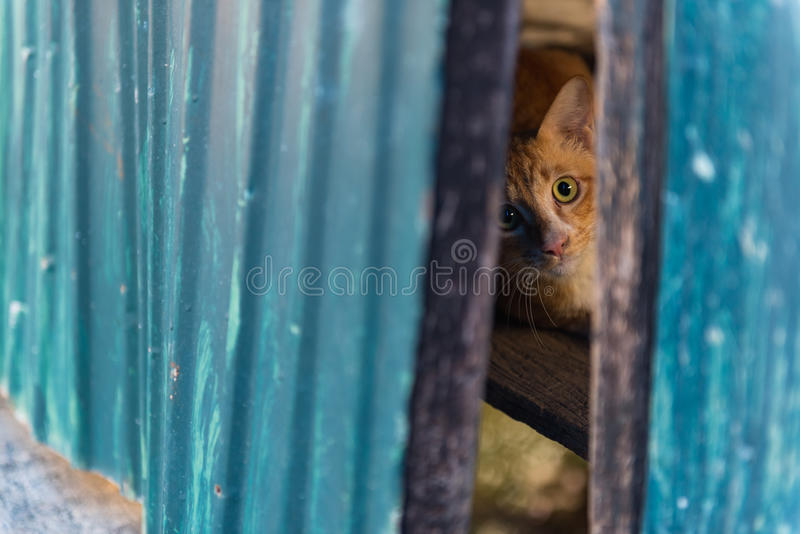 Red cat lying on the wood. Selective Focus. Red cat lying on the wood floor and it looking at us through gap of door royalty free stock photo