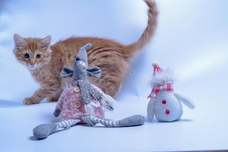 Red cat playing with toy rat and snowman. Cat kitten animal cute pet white feline fur kitty domestic adorable young baby pets bunny sweet blue mammal portrait royalty free stock photography