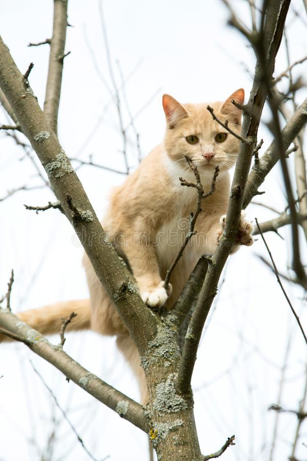 Red cat sits on a tree in spring. Afternoon stock images