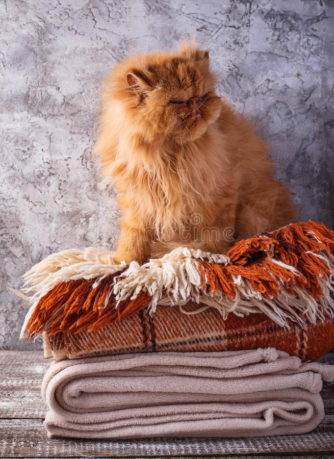 Red cat sitting on a stack of blankets stock image
