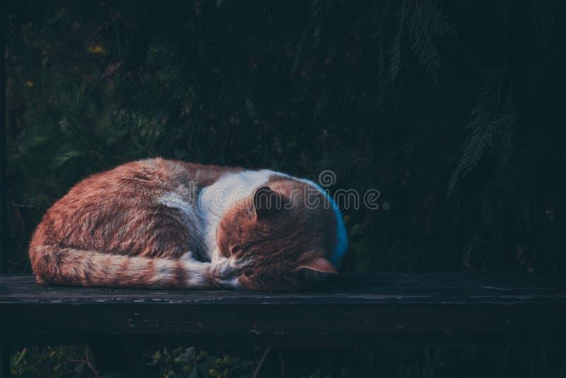 Red cat sleeping on a bench.Pet stock photos