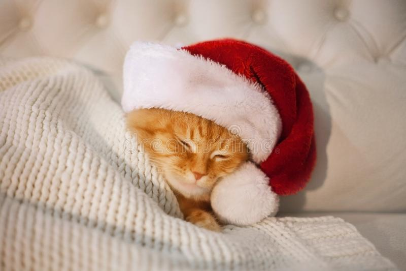 Red cat sleeping in the hat of Santa Claus royalty free stock photo