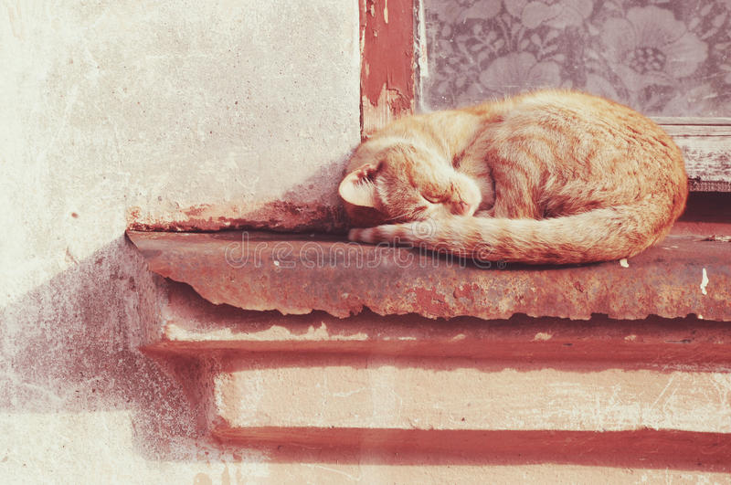 Red cat is sleeping under the warm rays of the summer sun. Red cat sleeping on the warm rays of the summer sun on the window royalty free stock photography