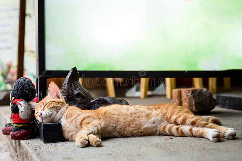 The red cat is sleeping in the sun, above it is an empty place for text.  stock image