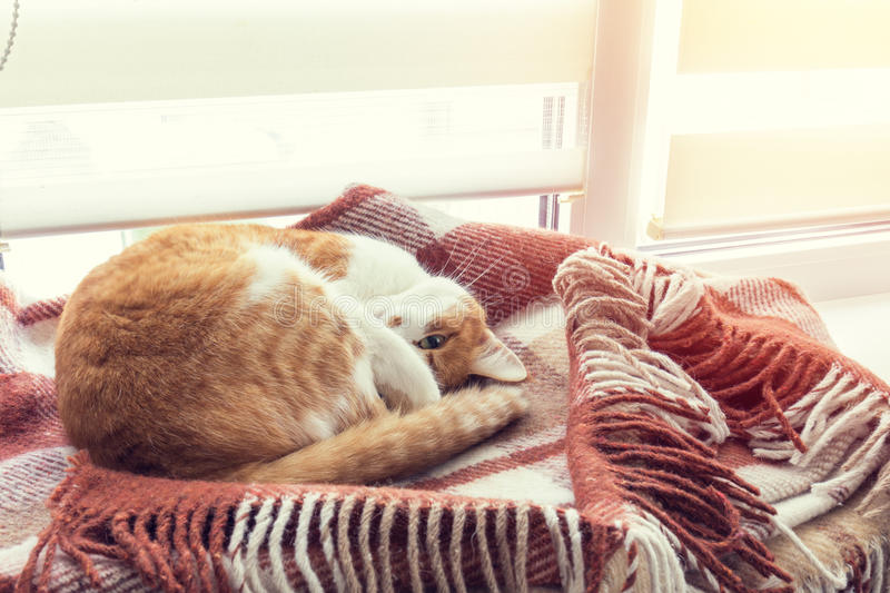 Red cat sleeping in warm wool plaid blanket royalty free stock photo