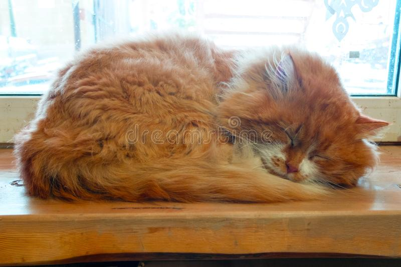 the Red cat sleeping on the windowsill stock photography