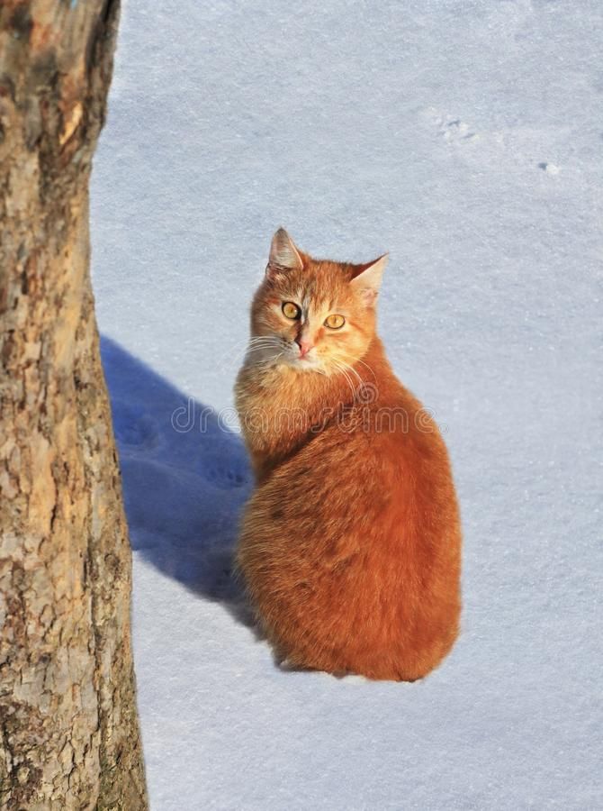 Adorable red cat in the snow stock images