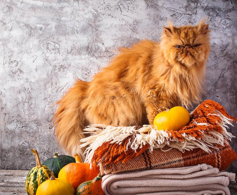 Red cat stands on a stack of plaids royalty free stock images