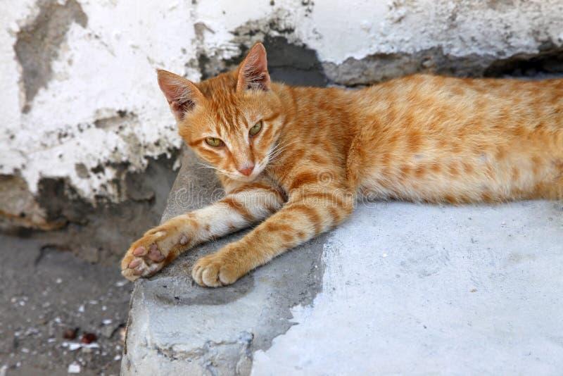 Red Cat. On the street Stone Town, Zanzibar stock photos