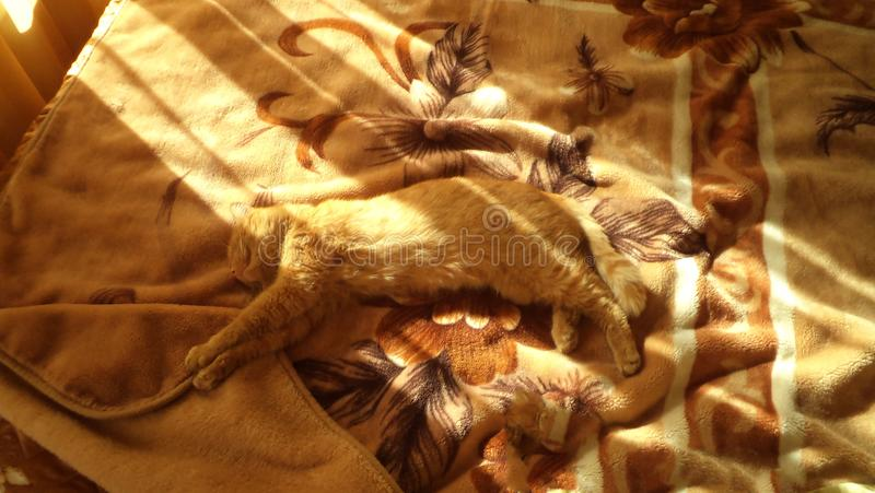 Red cat stretched out on the bed royalty free stock image