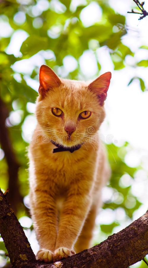 Red cat on a tree. Funny animals. Adorable, background, beautiful, curious, cute, domestic, feline, fluffy, fur, ginger, grass, isolated, kitten, kitty royalty free stock image