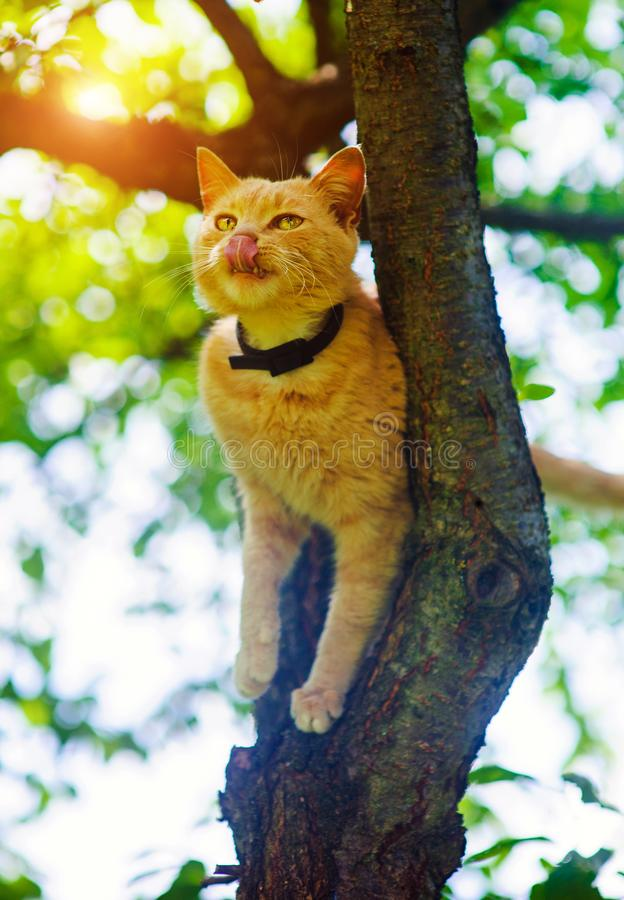 Red cat on a tree. Funny animals. Adorable, background, beautiful, curious, cute, domestic, feline, fluffy, fur, ginger, grass, isolated, kitten, kitty stock photos