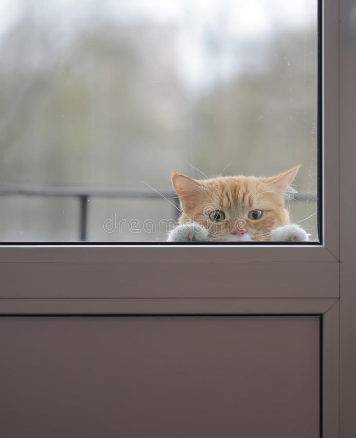 Free Red Cat With A Sad Eyes Outside The Glass Door Royalty Free Stock Photo - 60798225