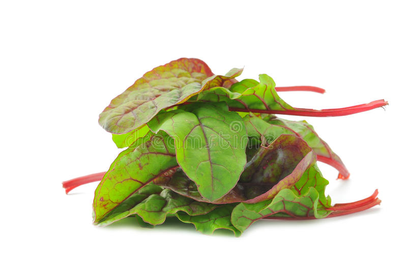 Red Chard salad leaves. Mediterranean food ingredients: Red Chard salad leaves stock photos