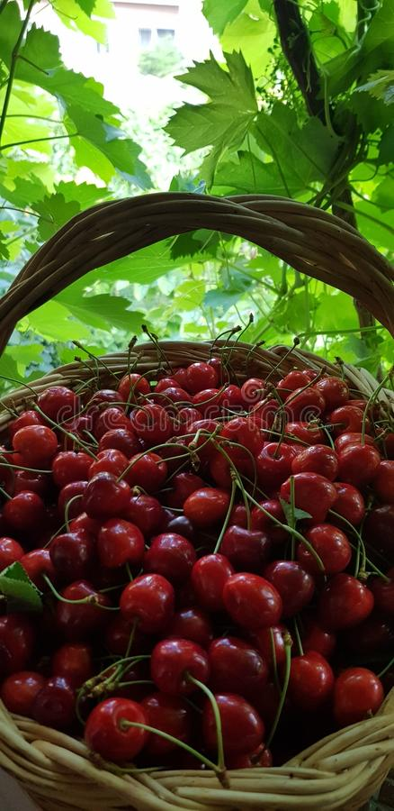 Red Cherries in the hamper. Green, fruit, leaf, tree, nature, natural, cherry, basket, food stock photos