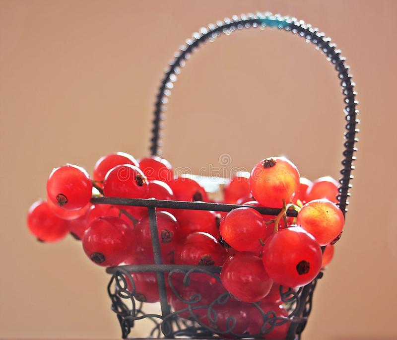 Red Cherries on Silver Metal Basket Photo royalty free stock photos