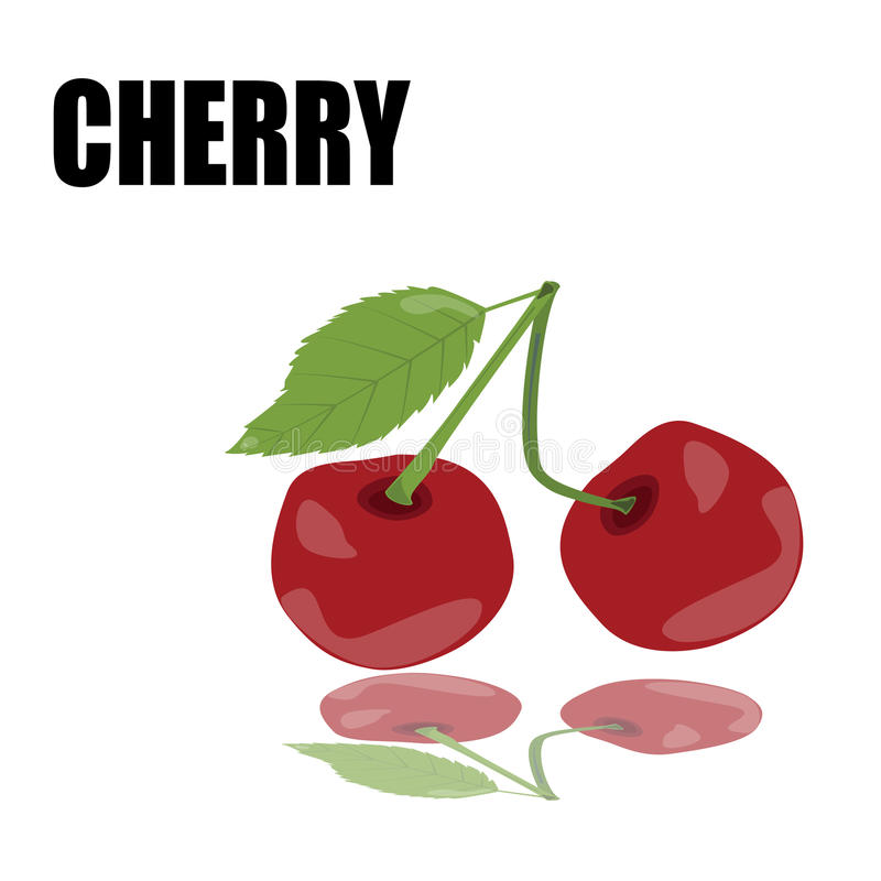 Red cherry with font vector illustration