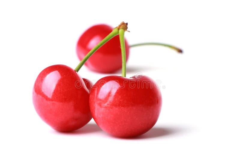 Red Cherry stock image