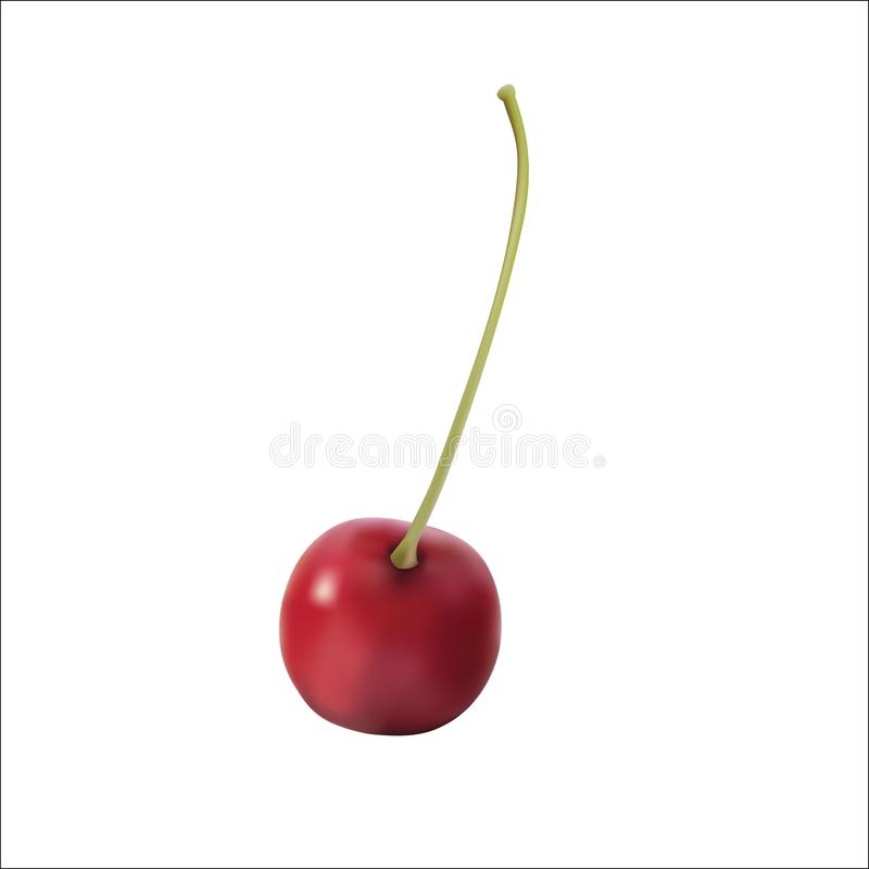 Red cherry. Realistic vector of red cherry. isolated berry royalty free illustration